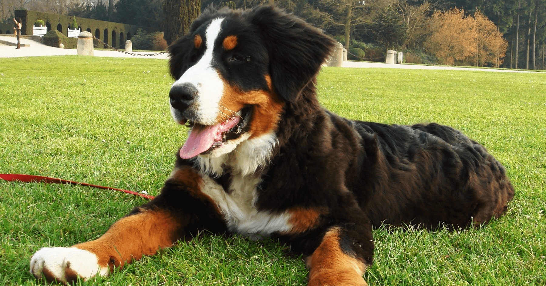 What You Should Know About The Bernice Mountain Dog